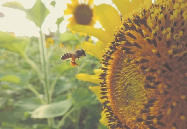 Blommor, bin och privatekonomi