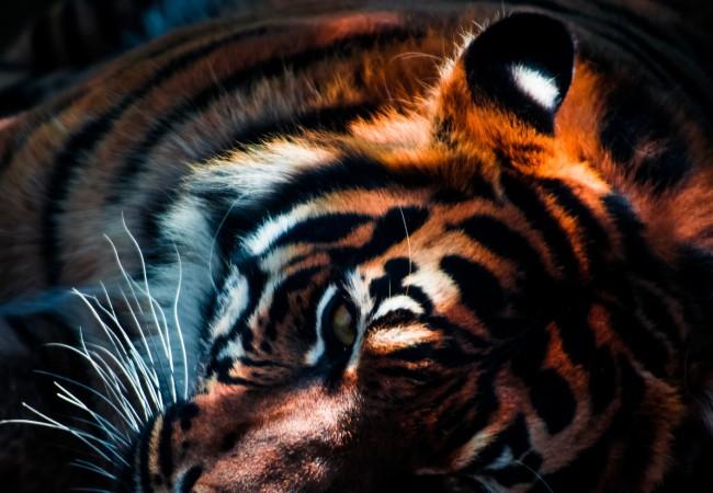 4 sätt att hantera sabeltandade tigrar och grupptryck