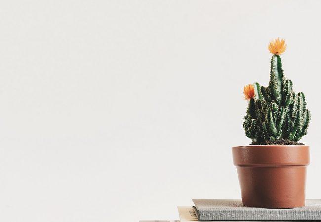 5 tips på vägen i att rensa i röran